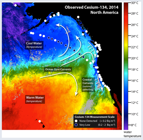 Satellite measurements of ocean temperature (illustrated by color) from July 28th to August 4th and the direction of currents (white arrows) help show where radionuclides from Fukushima are transported. Large scale currents transport water westward across the Pacific. Upwelling along the west coast of North America in the summertime brings cold deep water to the surface and transports water offshore. Circles indicate the locations where water samples were collected. White circles indicate that no cesium-134 was detected. Blue circles indicate locations were low levels of cesium-134 were detected. No cesium-134 has yet been detected along the coast, but low levels have been detected offshore. (Woods Hole Oceanographic Institution)