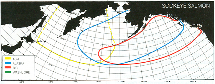Figure 1. Approximate range for the distribution of Sockeye Salmon in the North Pacific Ocean originating from North America and Asia. Source: http://www.pac.dfo-mpo.gc.ca/fm-gp/species-especes/salmon-saumon/facts-infos/sockeye-rouge-eng.html