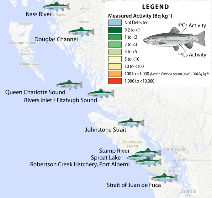 Summary of the amount of radioactive cesium isotopes in sockeye salmon and steel head trout harvested from BC waters in 2014 (Figure by Jonathan Kellogg jkellogg@uvic.ca).