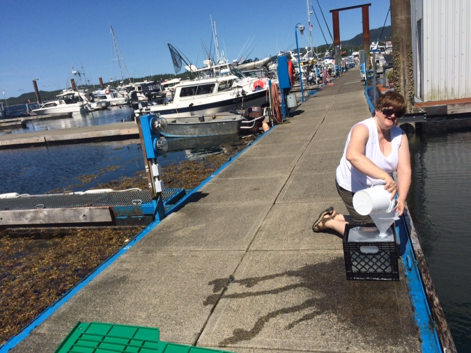 Sandy Humphrey of SD 91 collecting the InFORM seawater sample in a very sunny Prince Rupert harbour.