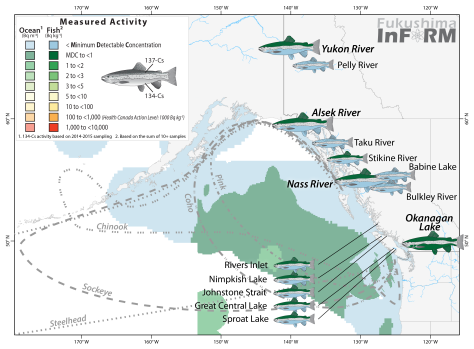 Results of the 2015 InFORM biotic monitoring program with updated results (larger, bold italics) where individual fish samples were reanalyzed in search of the Fukushima fingerprint isotope, 134-Cs.